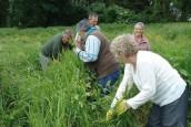 chantier nature organisé par le Conservatoire d'espaces naturels de Picardie