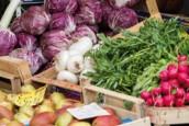 Grandes phases du projet sur les circuits alimentaires de proximité