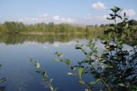 étangs de Le Plessis Brion